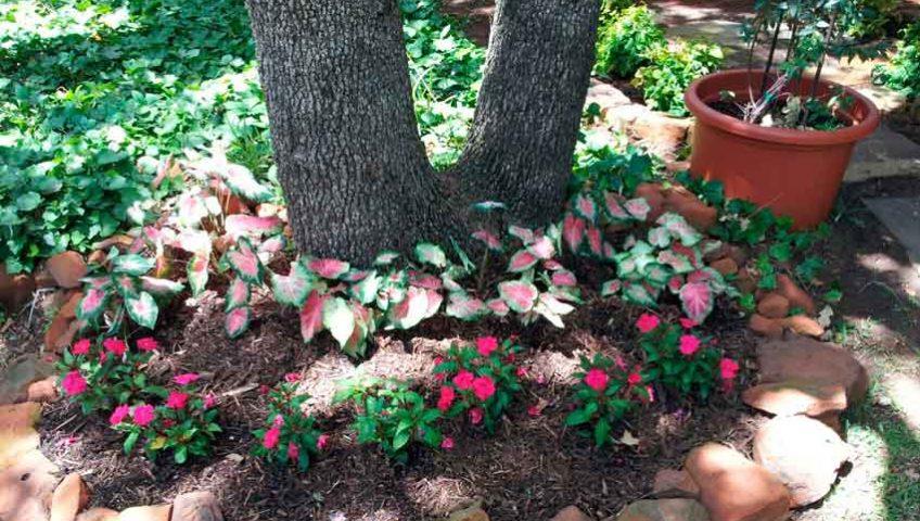 Arlington Tree Service, Restoration And Care
